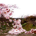 岡城桜並木360度映像