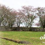 岡城の中の自然-、桜並木