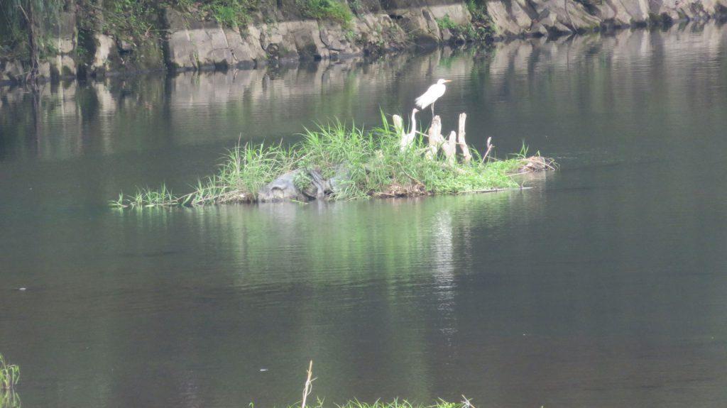 鬼ヶ城の浅瀬に停まる鷺