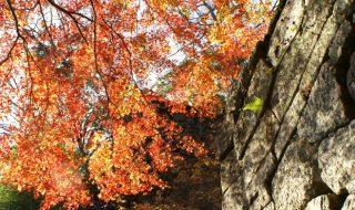 天空の豊後竹田「岡城」 岡城跡(岡城址) 紅葉の名所スライドギャラリー