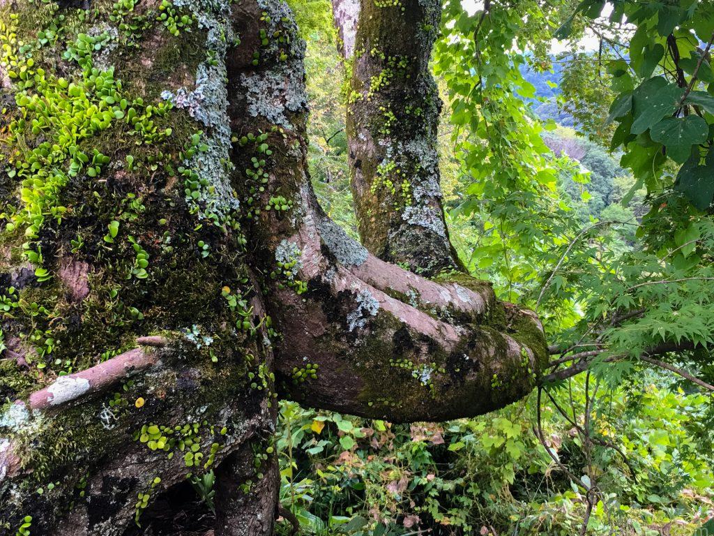 下原門の樹木