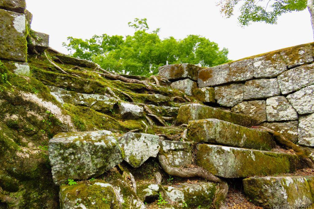 西中仕切櫓のラピュタの木の根