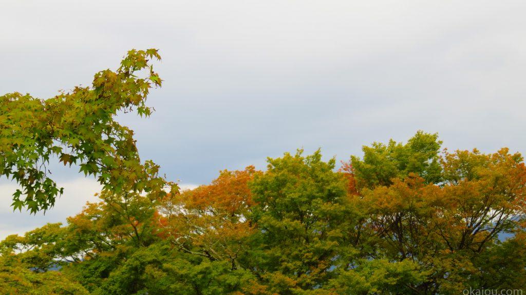 岡城の紅葉(三の丸)
