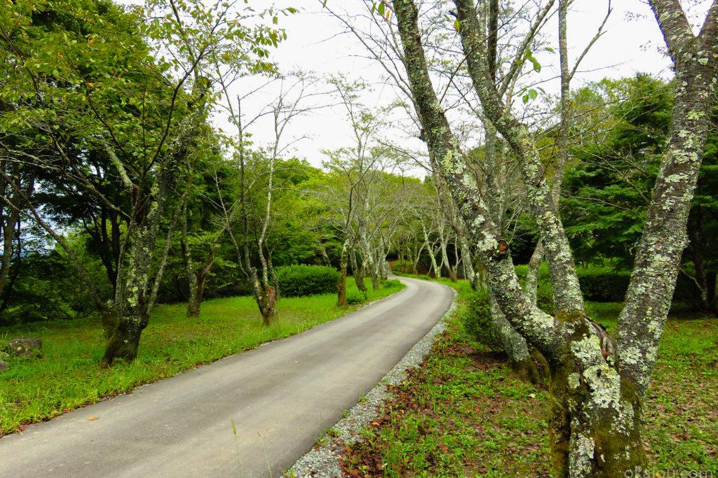 桜並木の道(東中仕切)