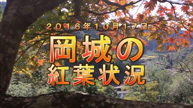 九州大分県の紅葉の名所 紅葉狩りに秋のデートに最適オススメ。
