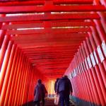 扇森稲荷神社 こうとうさま 鳥居の並ぶ参道