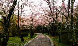 東中仕切の先 桜並木