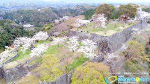 桜の名所岡城跡 満開の桜と観光客で賑わう 本丸・三の丸