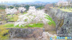 岡城跡 三の丸 桜の写真 Vol.1