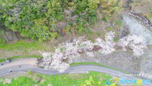 岡城跡 大手門 桜の写真 Vol.2