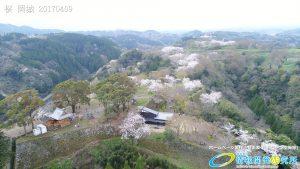 岡城跡 二の丸 滝廉太郎像  桜 Vol.3