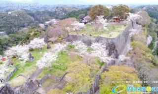 岡城跡 三の丸 桜の写真 Vol.3