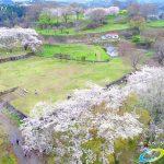 岡城跡 家老屋敷 桜の写真 Vol.3