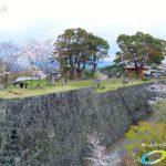 岡城跡 本丸 桜の写真 Vol.4