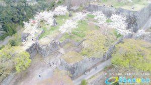 岡城跡 三の丸 桜の写真 Vol.4