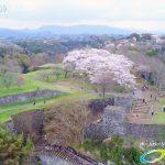 岡城跡 大手門 桜の写真 Vol.5