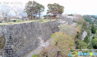 岡城跡 本丸 桜の写真 Vol.5