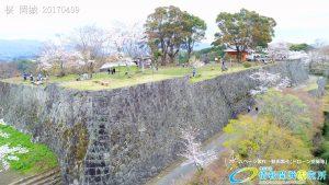 岡城跡 本丸 桜の写真 Vol.6