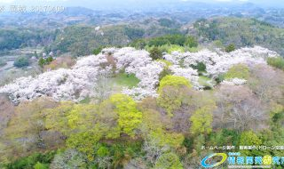 岡城跡 中川清秀公を祀る御廟 桜の写真 Vol.7