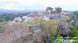 岡城跡 本丸 桜の写真 Vol.7