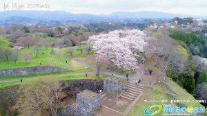 岡城跡 大手門 桜の写真 Vol.8