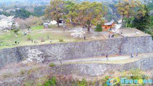 岡城跡 本丸 桜の写真 Vol.8