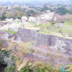 岡城跡 本丸 桜の写真 Vol.9