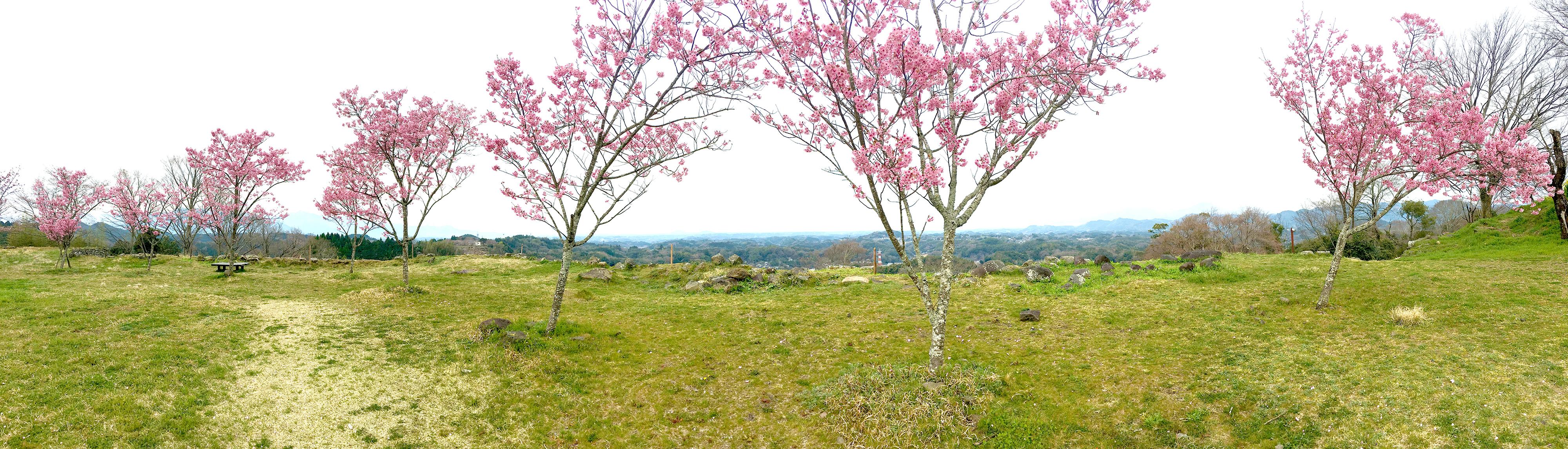 桜と、阿蘇山、くじゅう連山、祖母山を一望できる西の丸