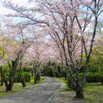 御廟所への道(本丸裏)