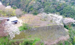 岡城 桜 写真 ギャラリー