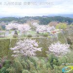 桜 三の丸 花見 岡城跡4K写真 Vol.1