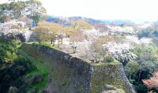"花見日和 岡城跡 九州竹田城 20170412 (4K) ""Cherry blossom viewing"" Drone video in Oka castle"