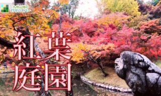 美しく色づいた見頃の紅葉庭園を散策!おすすめ絶景ドローン映像4K 用作公園